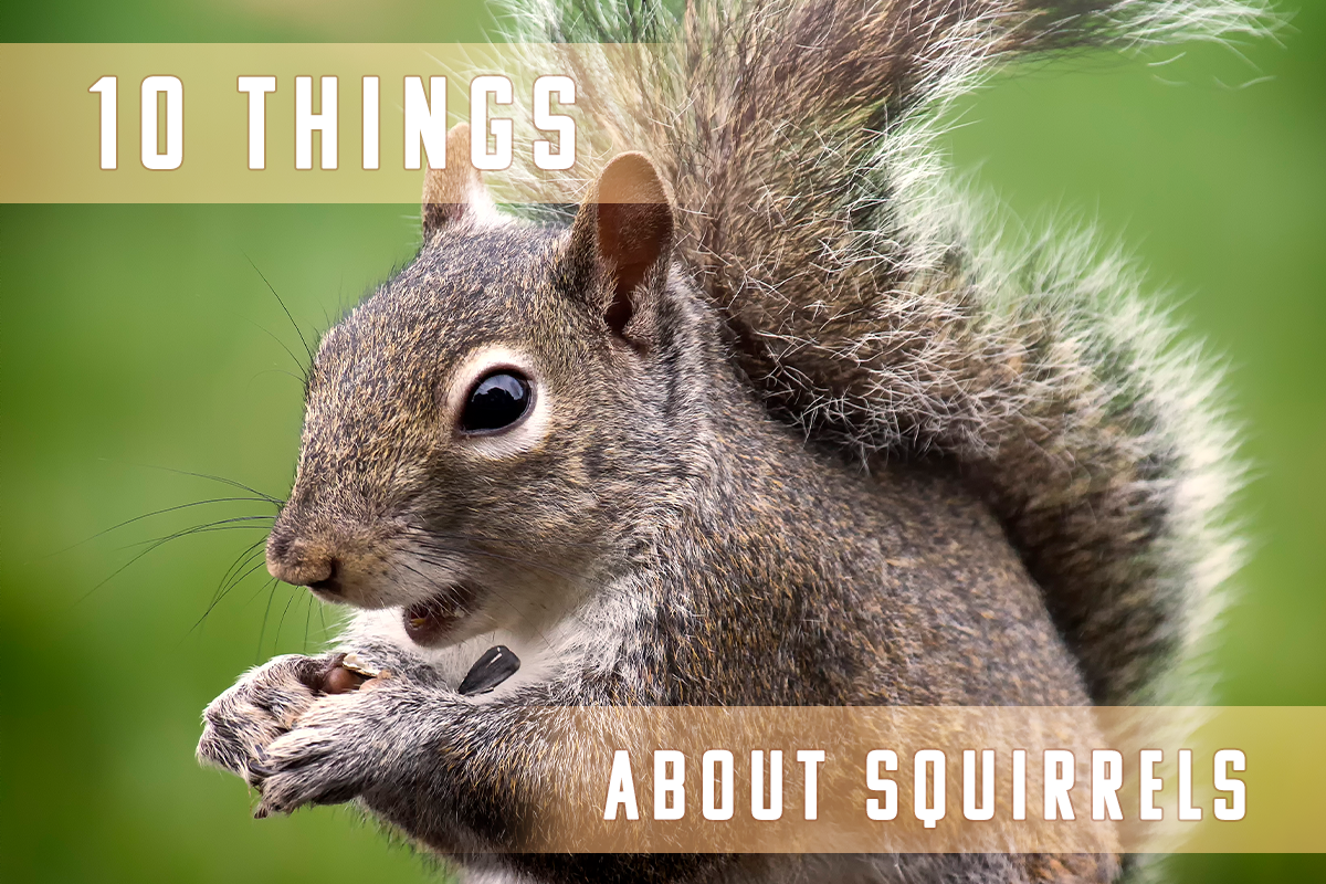 10 Things You Didn't Know About Squirrels